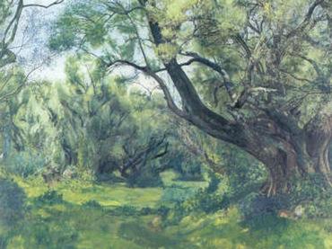 Francisco Goitia, grupo de olivares, 1939,  óleo